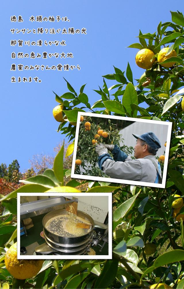 木頭の柚子